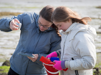 Identifying shoreline species at Milton Locks nature reserve