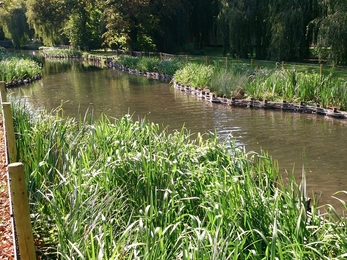 River Itchen in Winchester after our improvements