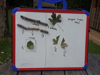 White board with leaves and twigs taped to it, each with captions to describe how they're fractions of one another