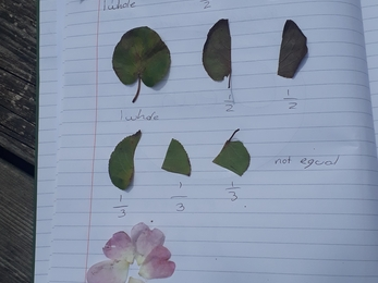 Notebook with leaves and petals taped to it, each with captions to describe how they're fractions of one another