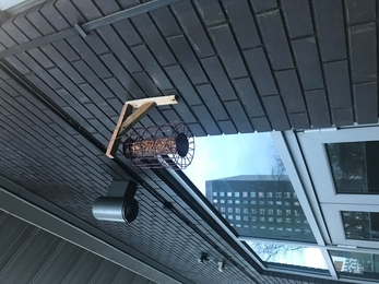 Peanut cage bird feeder hanging off wall at youth centre