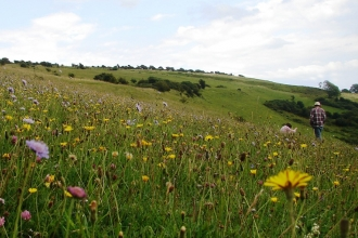 Arreton Down Nature Reserve, Isle of Wight