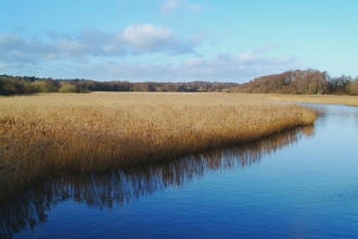 Lymington Reedbeds by Mark Heighes