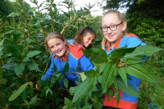 Calmore Guides pulling Himalayan balsam in the New Forest