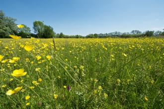 Meadow at Winnall Moors