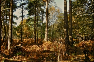 Baddesley Common, by Steve Page