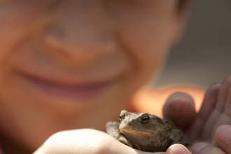 Child holding a frog © Amy Lewis