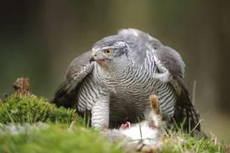 Birds Of Prey Hampshire And Isle Of Wight Wildlife Trust