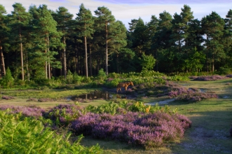 New Forest landscape