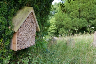 Insect home © David Kilbey