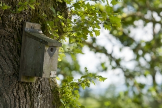 Bird nest box © Ross Hoddinott