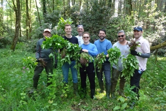 Staff from Lombard on a Himalayan balsam pull 23 May 2018