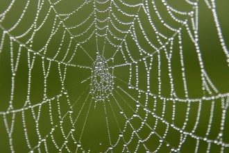 Spider Web,  ©Darin Smith