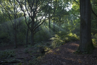 Light rays in oak woodland Swanwick Lakes ©Mike Read