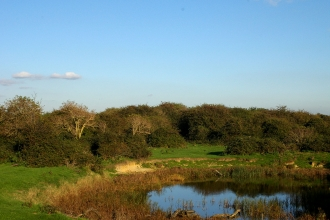 an old view of the bushes at Farlington Marshes