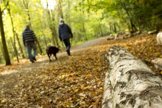 Couple walking dog through woodland with log in the foreground