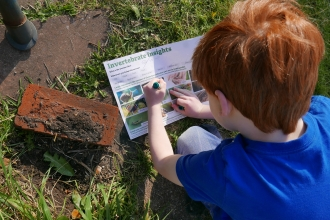 Boy doing invertebrate insight survey