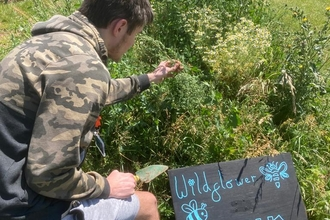 "Boy leaning over wildflower bank, looking at wildflowers. Big chalkboard sign with words ""Wildflower bank"" is planted at the front."