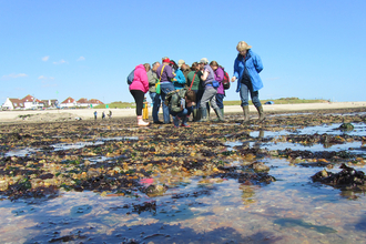 Intertidal survey at Lee-on-the-Solent by Caroline Meech