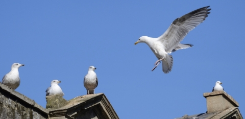 Glorious Gulls | Hampshire and Isle of Wight Wildlife Trust