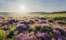 New Forest © Guy Edwardes/2020VISION