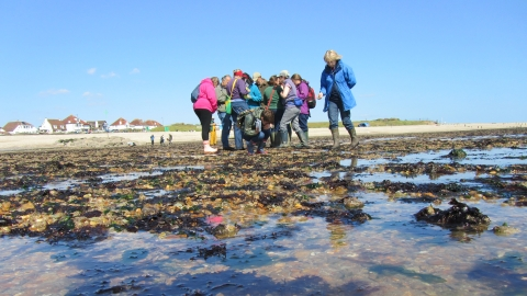 Shoresearch at Lee-on-Solent beach