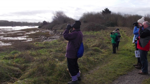 Birdwatching Fareham creek