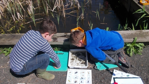 Springhill pond dipping