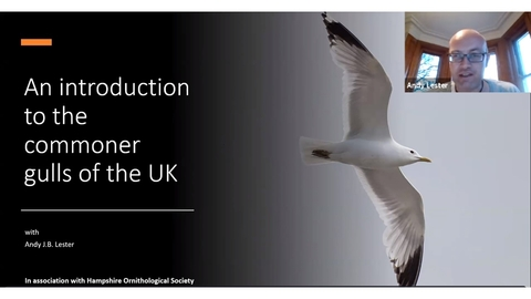 Andy Lester giving an online talk on gulls