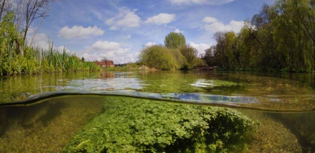 River Itchen at Itchen Stoke Mill