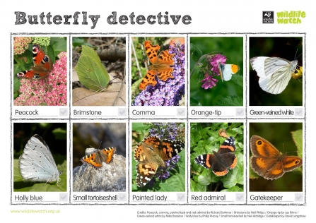 Butterfly detective spotter sheet thumb