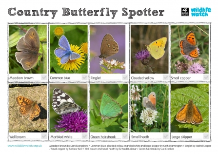 Country butterfly spotter sheet thumb