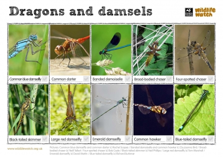 Dragonfly and damselfly spotter sheet
