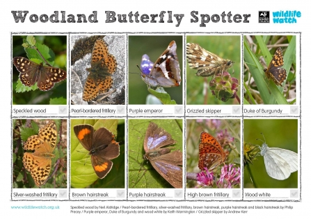 Woodland butterfly spotter sheet
