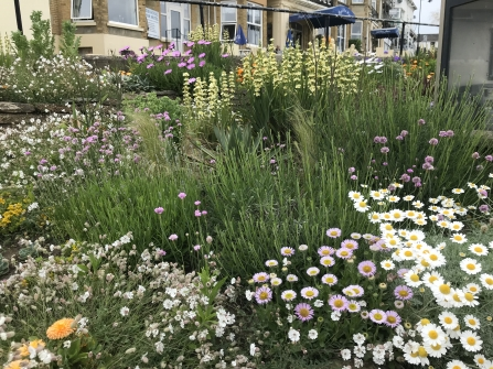 Sandown Green Town - flowerbed