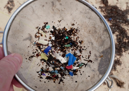 Microplastics collected in Sian Ka'an using the Big Microplastic Survey © David Jones/Just One Ocean