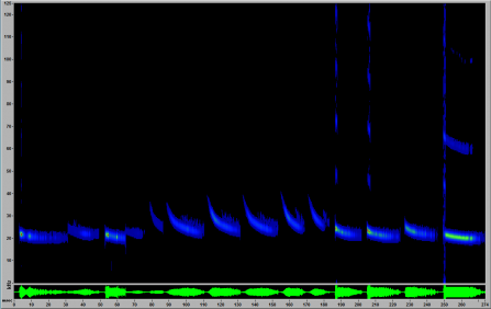 A screenshot from Sonobat software showing a noctule call with alternating call types