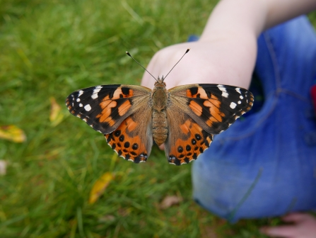 Painted lady butterfly © Gemma Paul