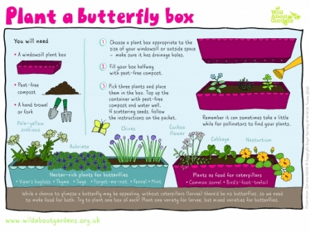 ACTIVITY-SHEET-BUTTERFLY-BOX_0