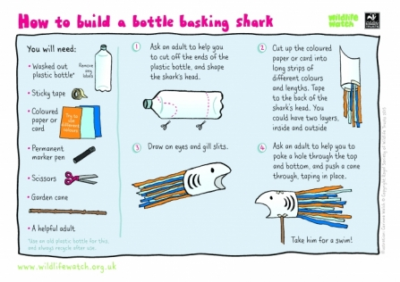 BOTTLE-BASKING-SHARK-2018_1