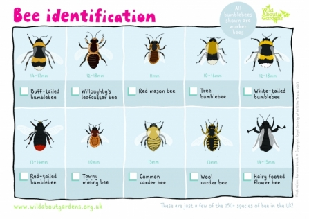 Bee ID sheet_0