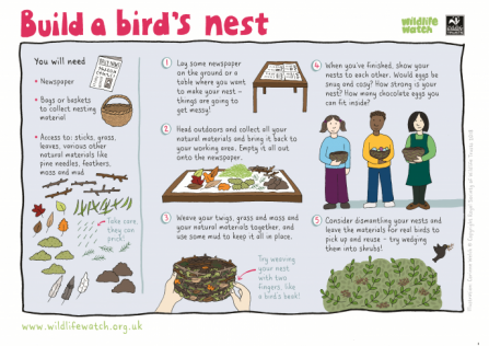 Build a birds nest_0