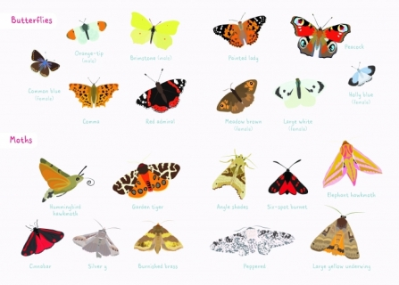Butterfly and moth spotting sheet_0