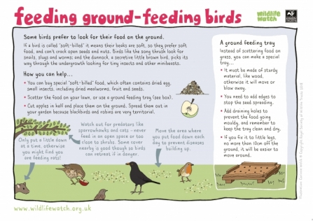 Ground feeding birds_0