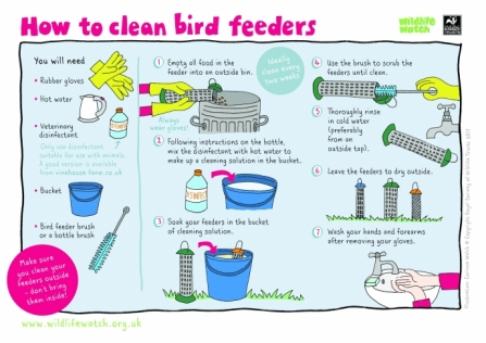 How to Clean Bird Feeders_0