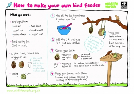 How to make a bird feeder_0