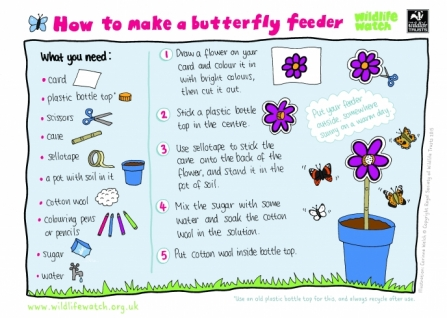 How to make a butterfly feeder_0