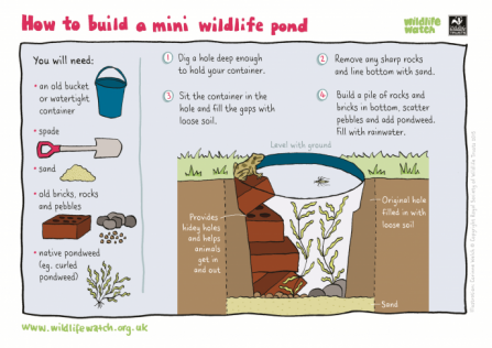 MINI-WILDLIFE-POND_0