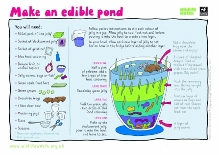 Make an edible pond_0