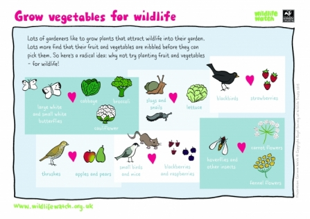 VEGETABLES-FOR-WILDLIFE_0